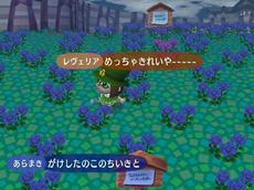 青バラ畑~~~~~~