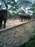 恐竜サイズの巨大アフリカ象ではありません