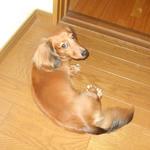mydog110816.jpg