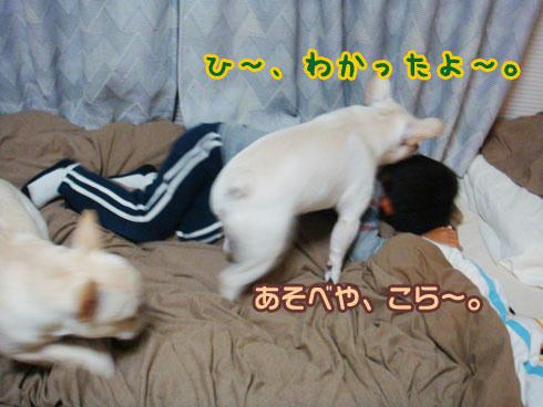 20071108_6.jpg