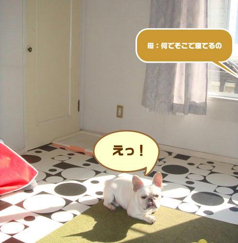 20071129_2.jpg