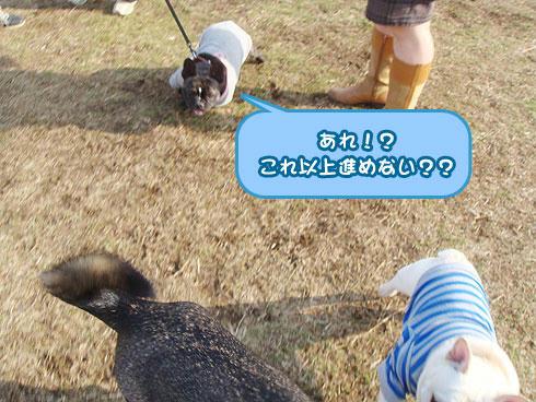 20080214_8.jpg