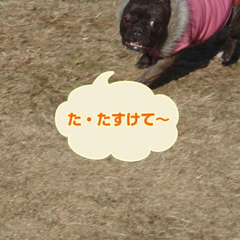 20080219_3.jpg