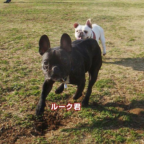 20080325_7.jpg