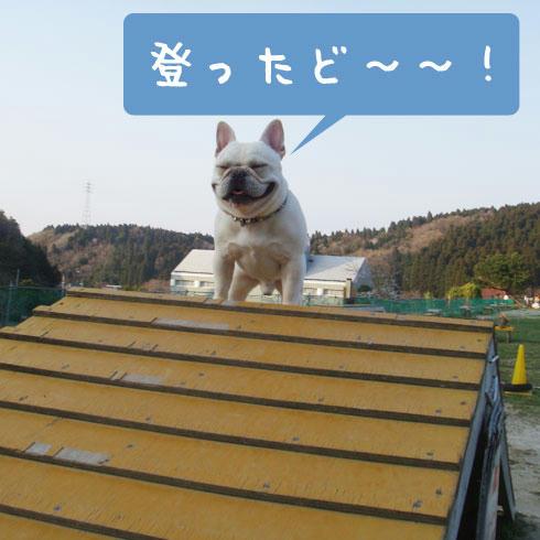 20080408_8.jpg
