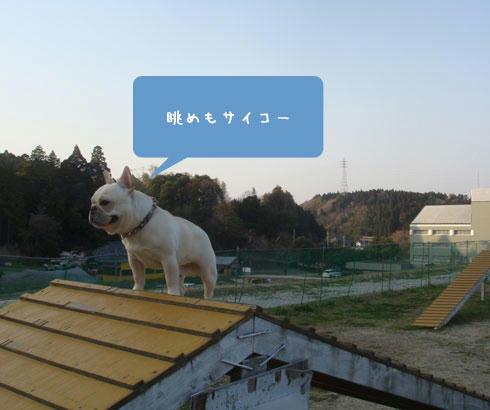 20080408_9.jpg