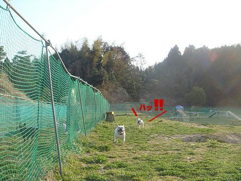 20080411_16.jpg