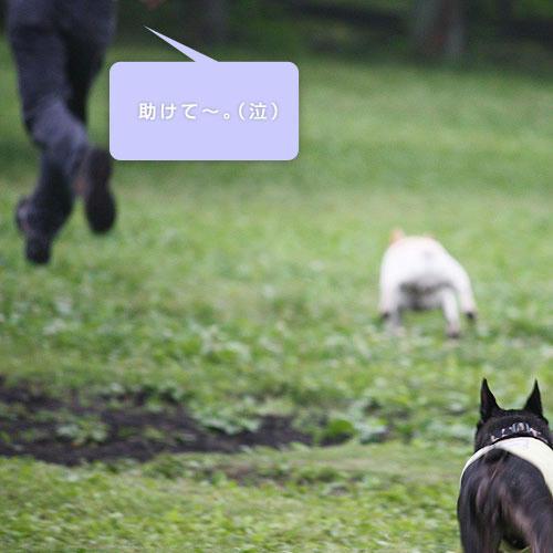 20080701_5.jpg