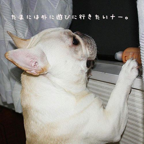 勝田台発!ニコ&ひかりのブログ