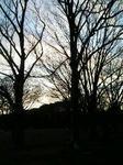代々木公園2