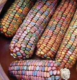 colorfull_corn.jpg