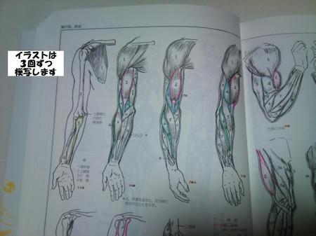 ルーミス 鉛筆デッサン 腕筋肉