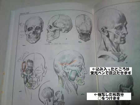 ルーミス 鉛筆デッサン 頭部筋肉