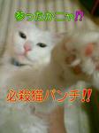image0059.jpg