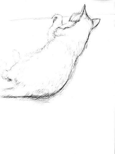 猫のスケッチその2_060903