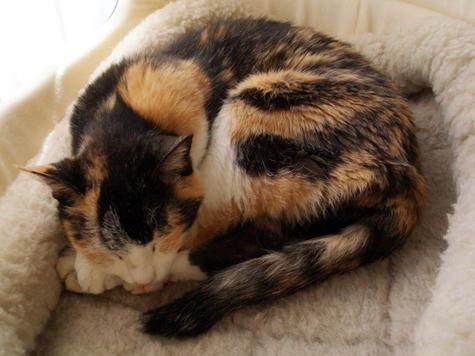 猫の資料画像_071008