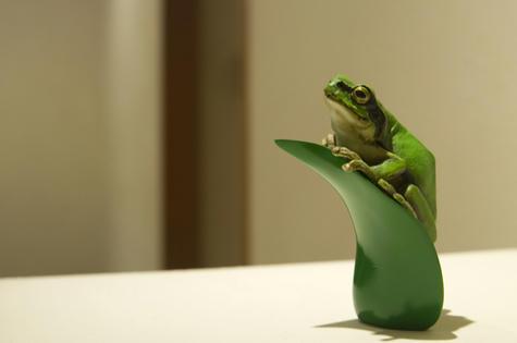 frog_001.jpg