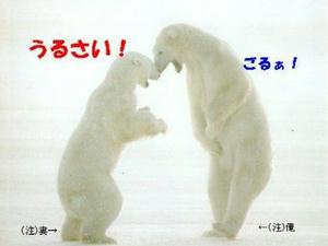 shirokuma_kenka.jpg
