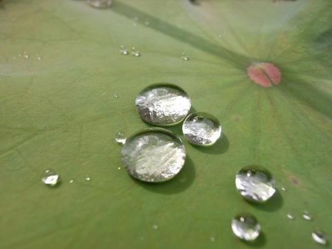 水玉の世界