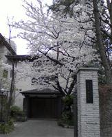 桜咲く、その寺の名前は・・・