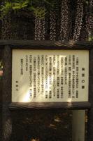 itobun_fuji_yurai.JPG