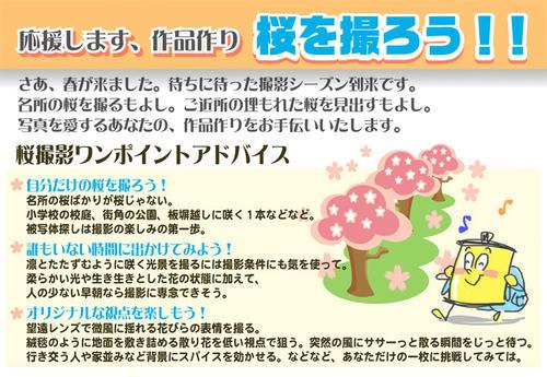 桜を撮ろう!