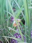 散歩の途中出会ったカエル