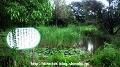 メダカの池(全景)