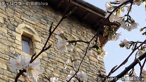 ミラコスタの桜