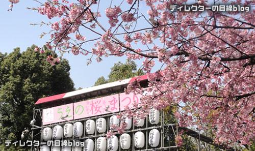 上野公園入り口の大寒桜が見頃です
