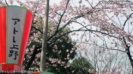 春の三連休は、大寒桜が見頃です@上野公園