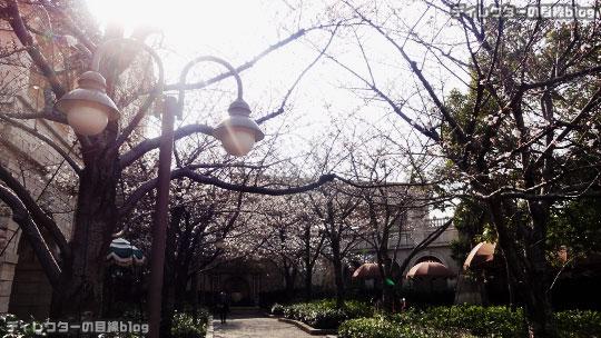°○°まだ2分咲き…ミラコスタの桜2016@東京ディズニー・シー(ピクニックエリア)