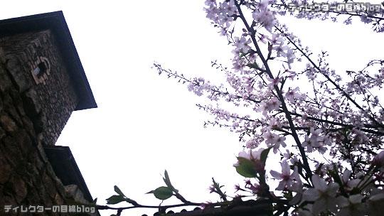 °○°ついに8分咲き…ミラコスタの桜2016と15周年の準備も着々と@東京ディズニー・シー(ピクニックエリア)