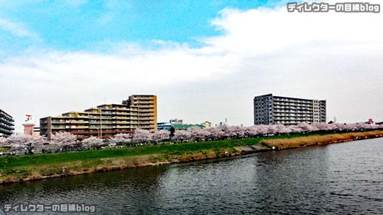 【動画】千葉県八千代市の桜2016 (ほぼ満開の新川千本桜)【FHD】