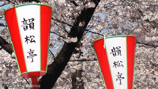 """桜満開の上野公園にある韻松亭で""""お花見弁当 豆桜""""を満喫"""