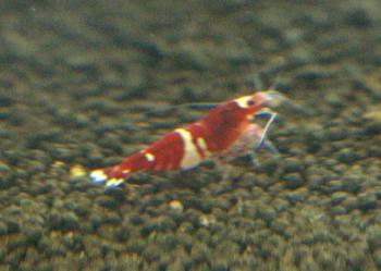 redd.JPG