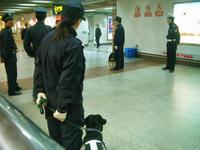 警察犬、警備中