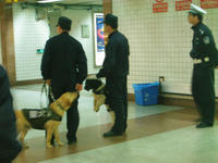 じゃれる警察犬たち