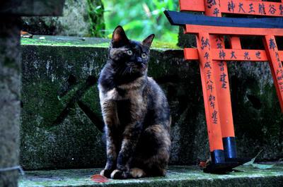 伏見稲荷のネコ