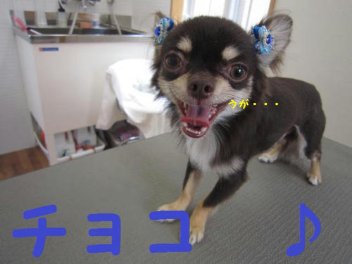 4b07ce7f.JPG