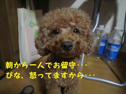 IMG_2181.JPG
