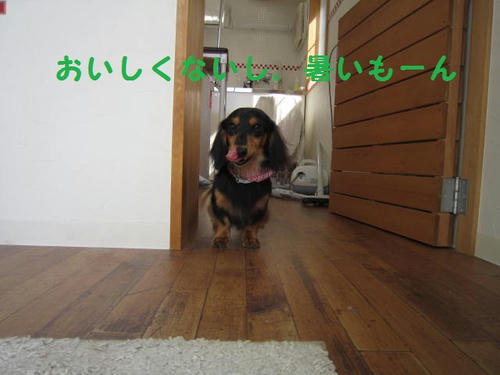 IMG_2743.JPG