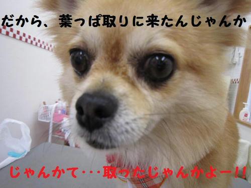 IMG_3069.JPG