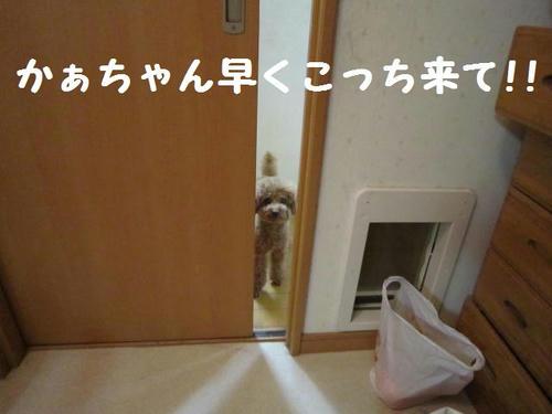 IMG_3471.JPG