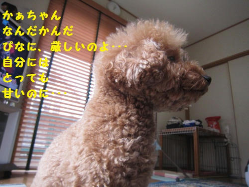 IMG_0835.JPG