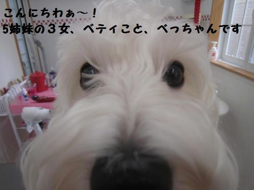 IMG_0842.JPG