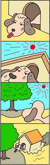 犬・ペット・犬小屋・酷暑・猛暑・木陰