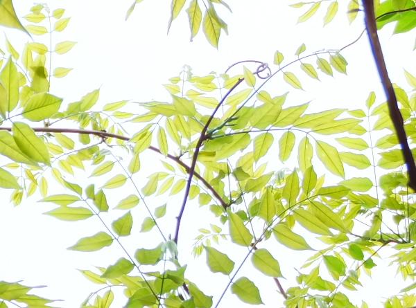 DSCF6309.jpgr5.jpg