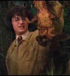 ハリーとドクニンジン
