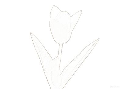花(チューリップ) | 塗り絵のイメージ